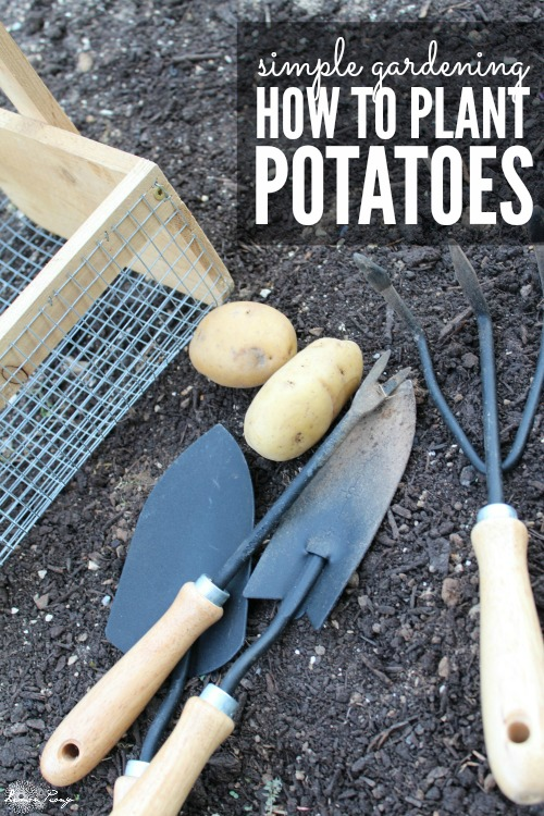 How to Plant Potatoes for Spring