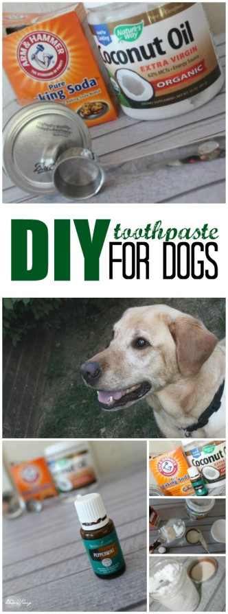 DIY Toothpaste for Dogs